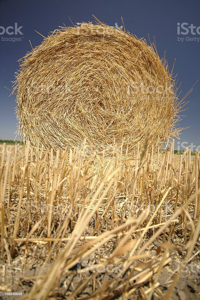 Straw roll on the field royalty-free stock photo
