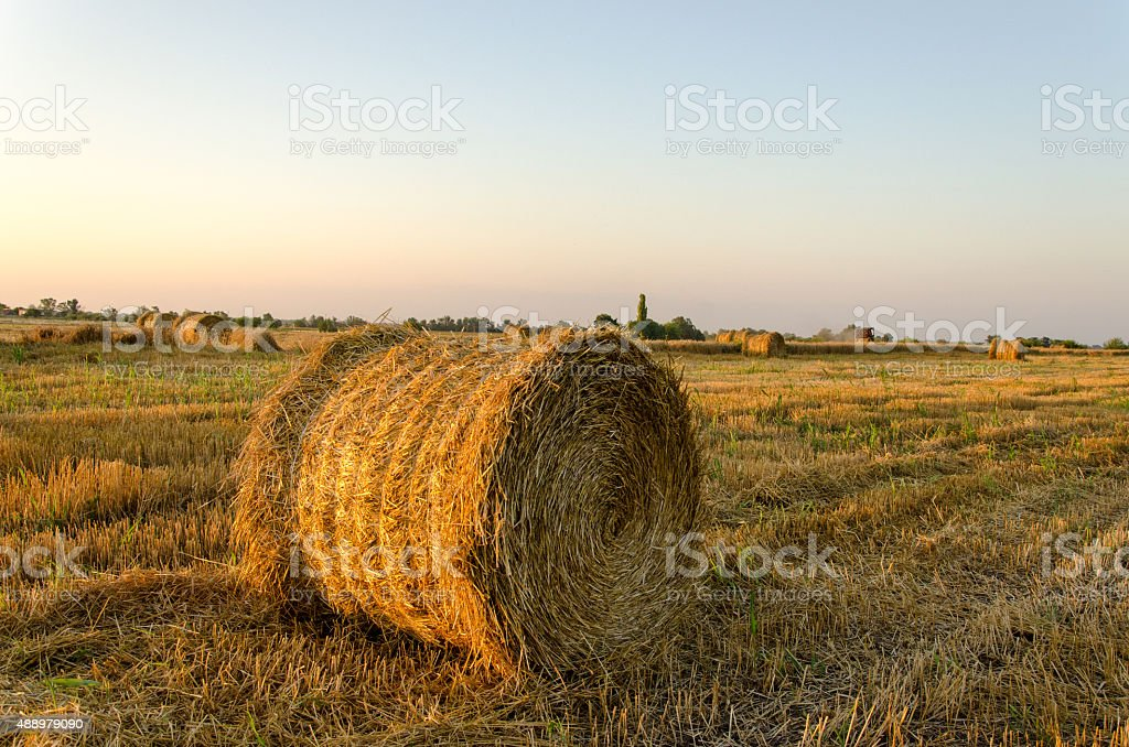 straw, rolled up in a field stock photo