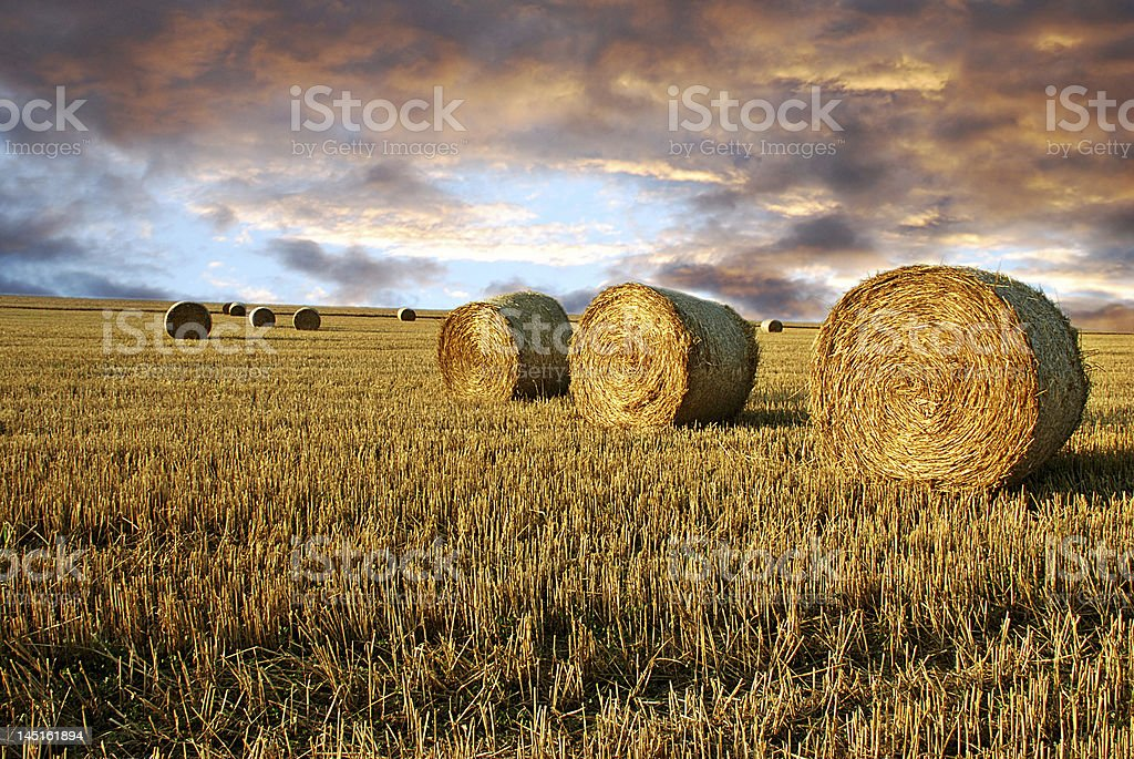 Straw rolls and dramatic sky stock photo