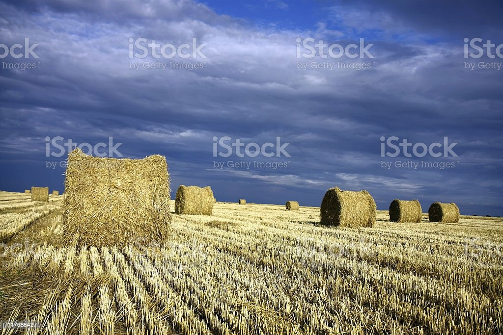 straw rolls of barley on the field royalty-free stock photo
