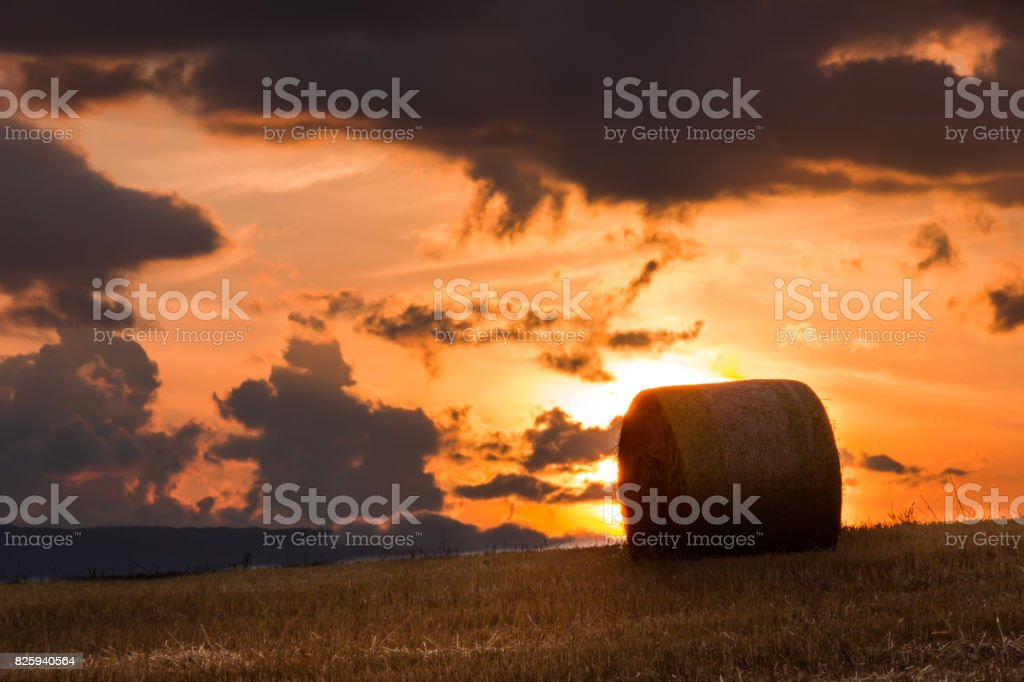 Straw Rolls  of Biei stock photo