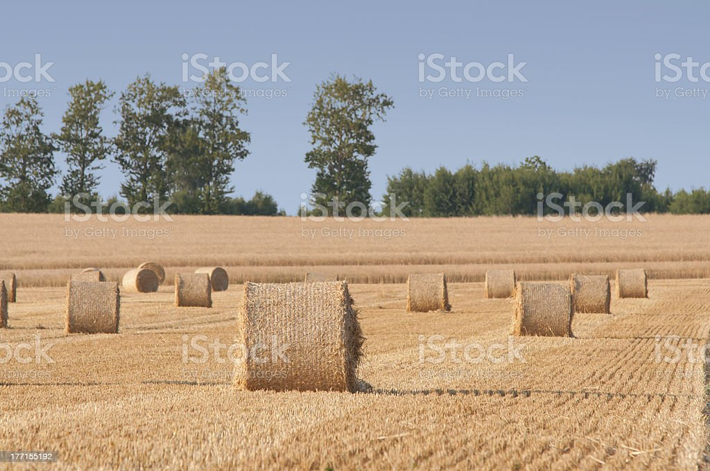 Straw rolls on summer farmer field royalty-free stock photo