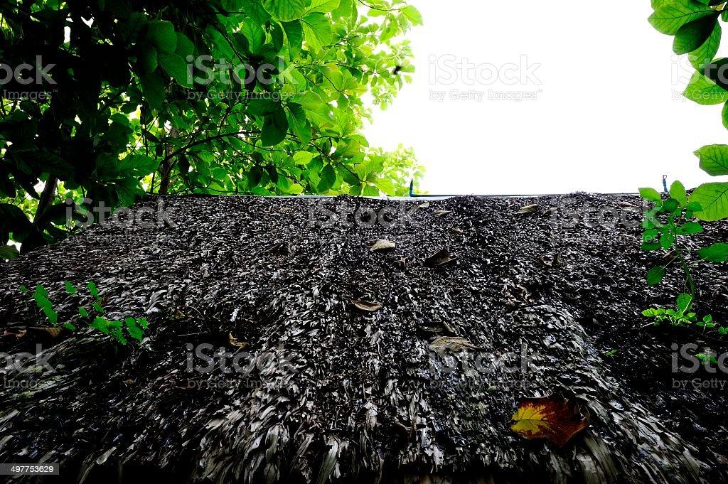 Straw roof stock photo