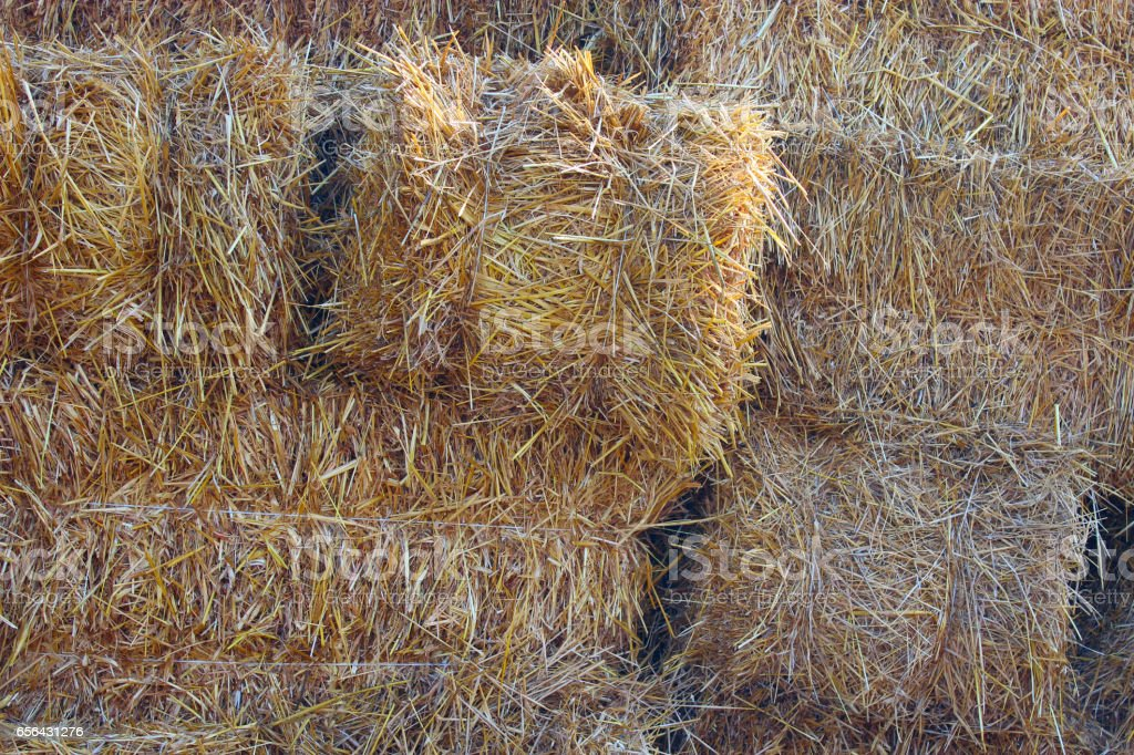 straw stacked in bales stock photo