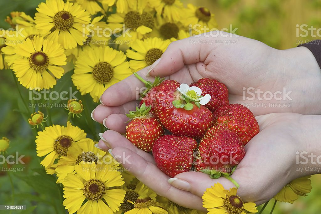 strawberries and yellow flowers royalty-free stock photo