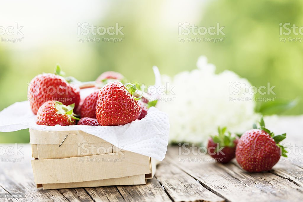 strawberries in basket fresh from garden royalty-free stock photo