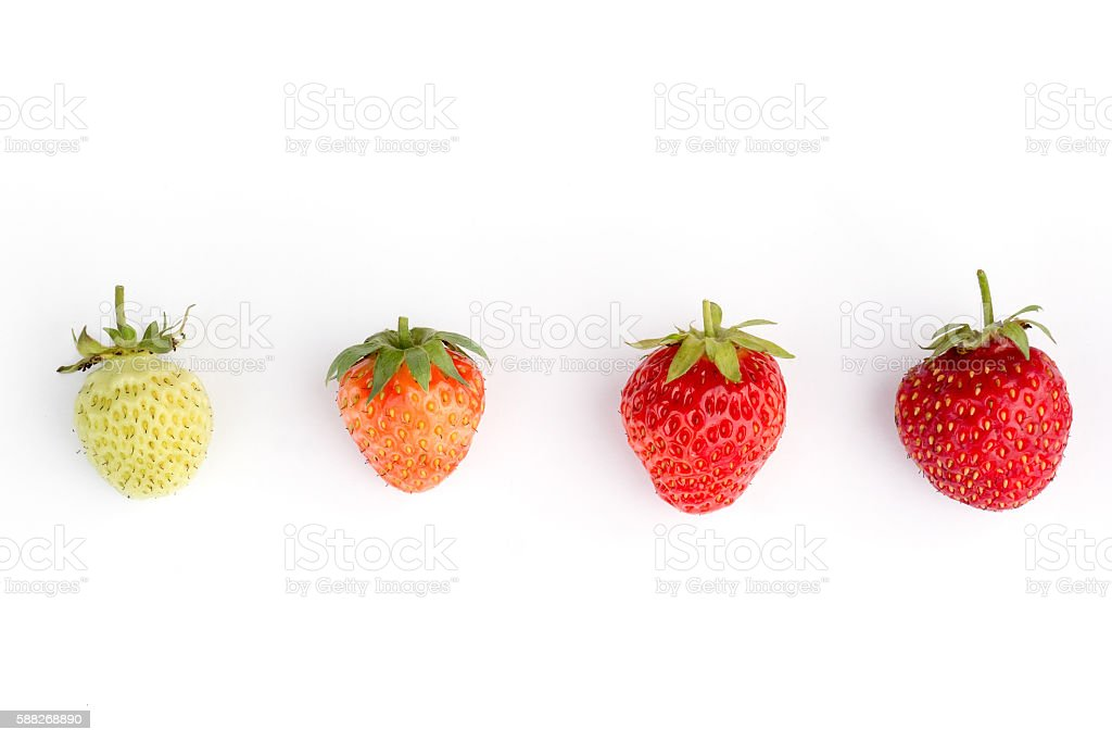 Strawberries isolated. stock photo
