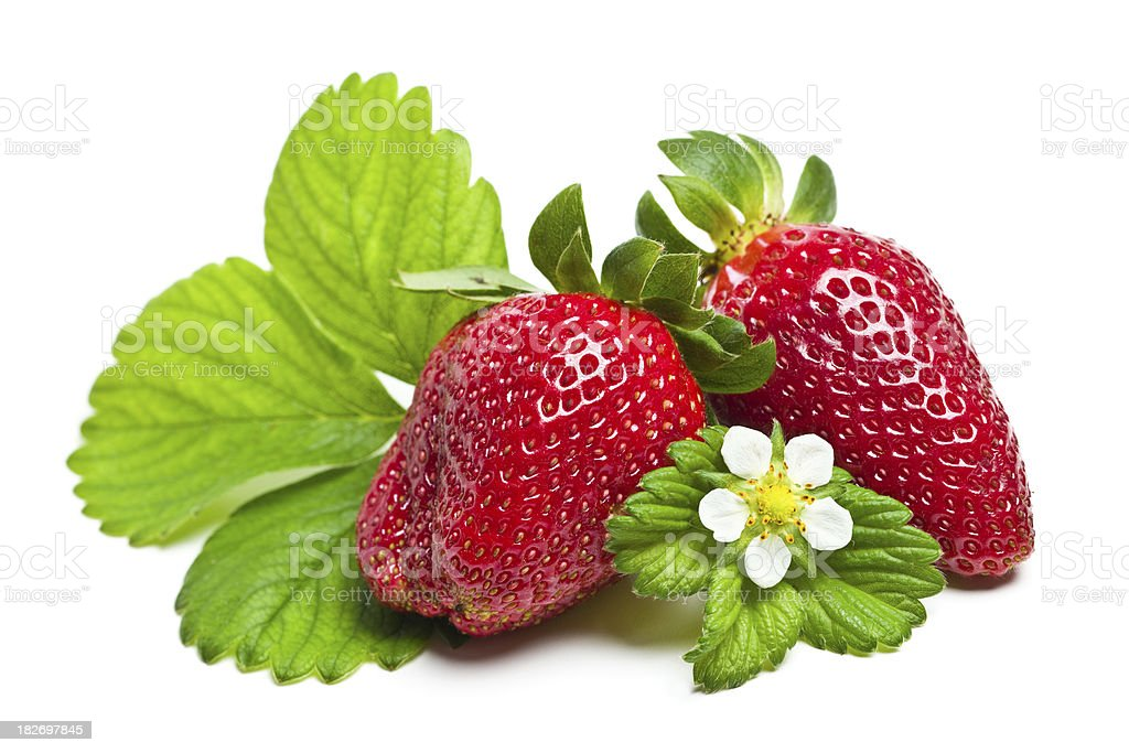 Strawberries with leaves and flowers on white stock photo