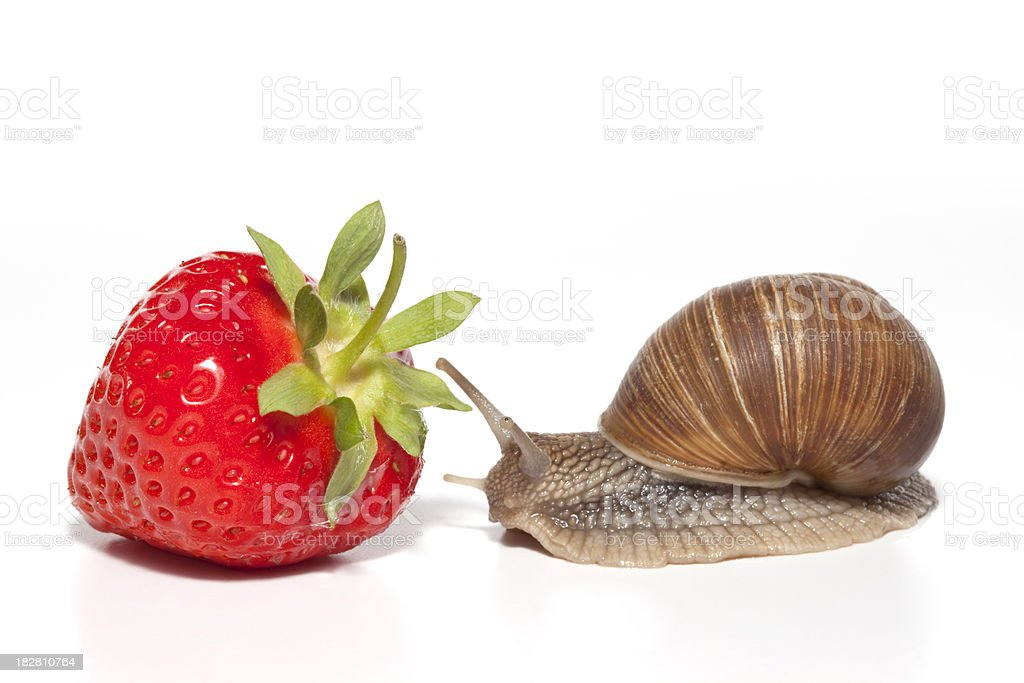 strawberry and snail stock photo