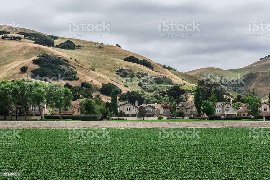 Strawberry Fields Juxtposed with Urban Housing stock photo