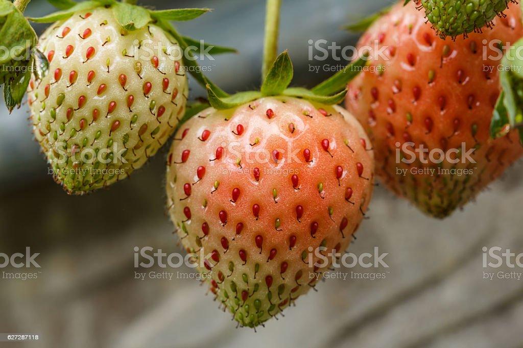Strawberry fresh in the garden. stock photo