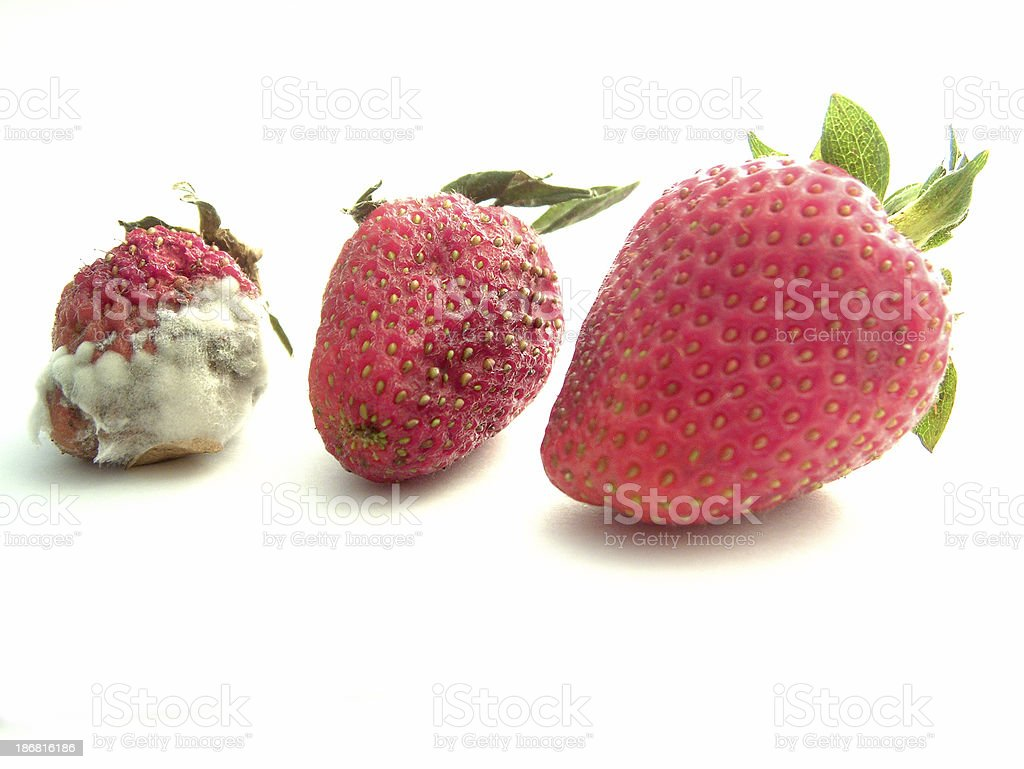 Strawberry Generations royalty-free stock photo