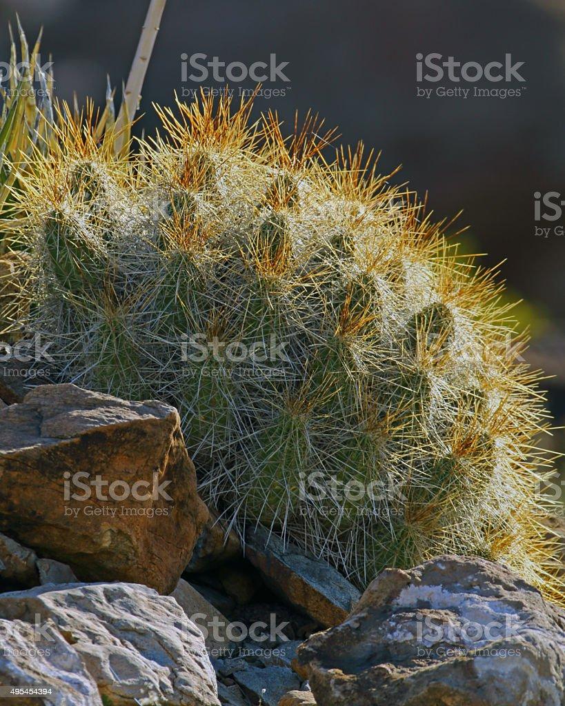 Strawberry Hedgehog Cactus Vertical Format stock photo