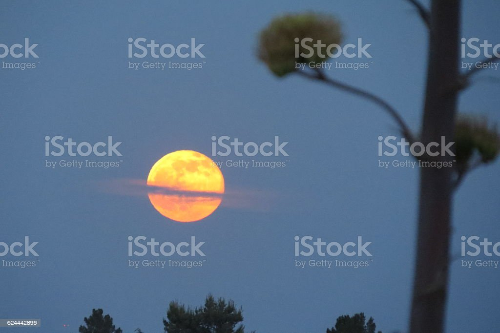 Strawberry Moon and Agave stock photo