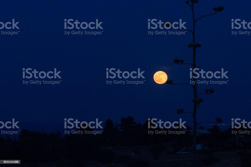 Strawberry Moon at Dusk stock photo