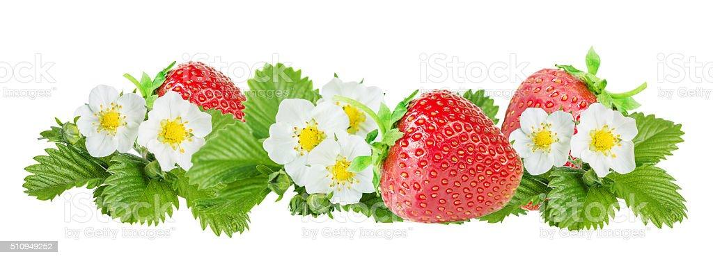 Strawberry over white background stock photo