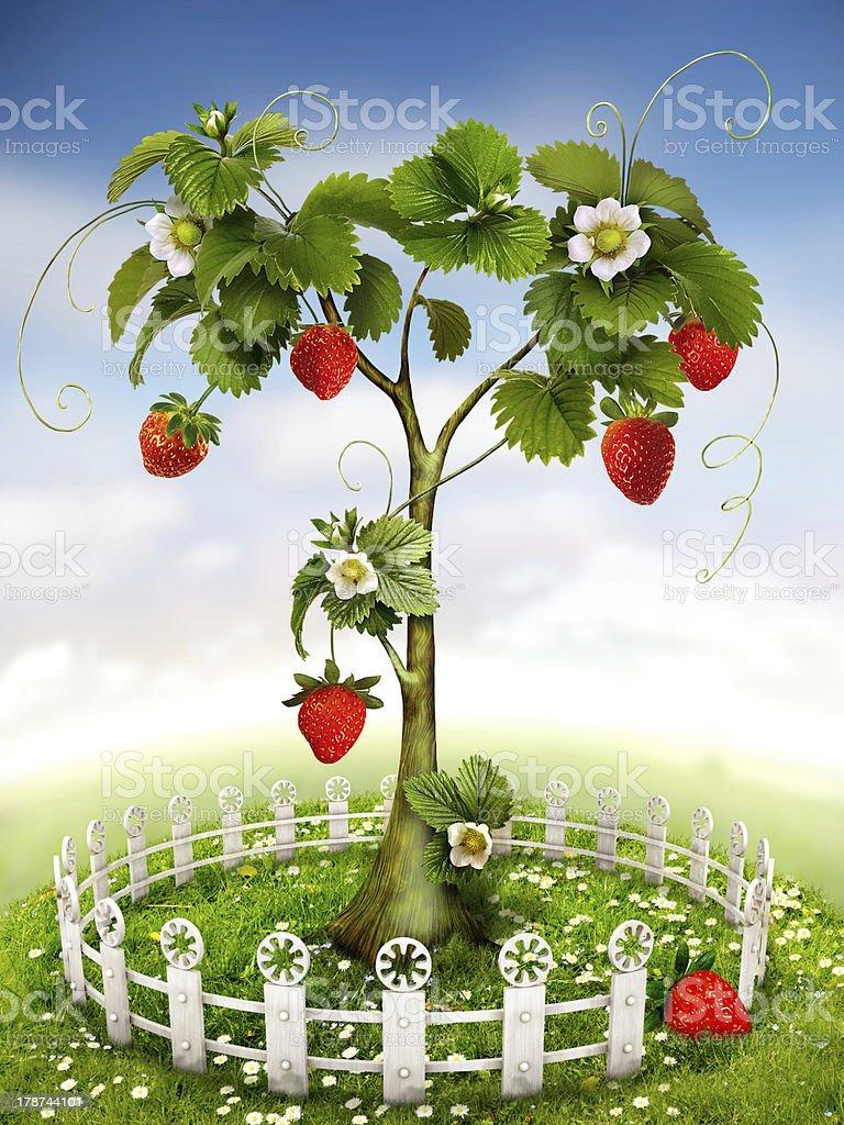 Strawberry Tree stock photo