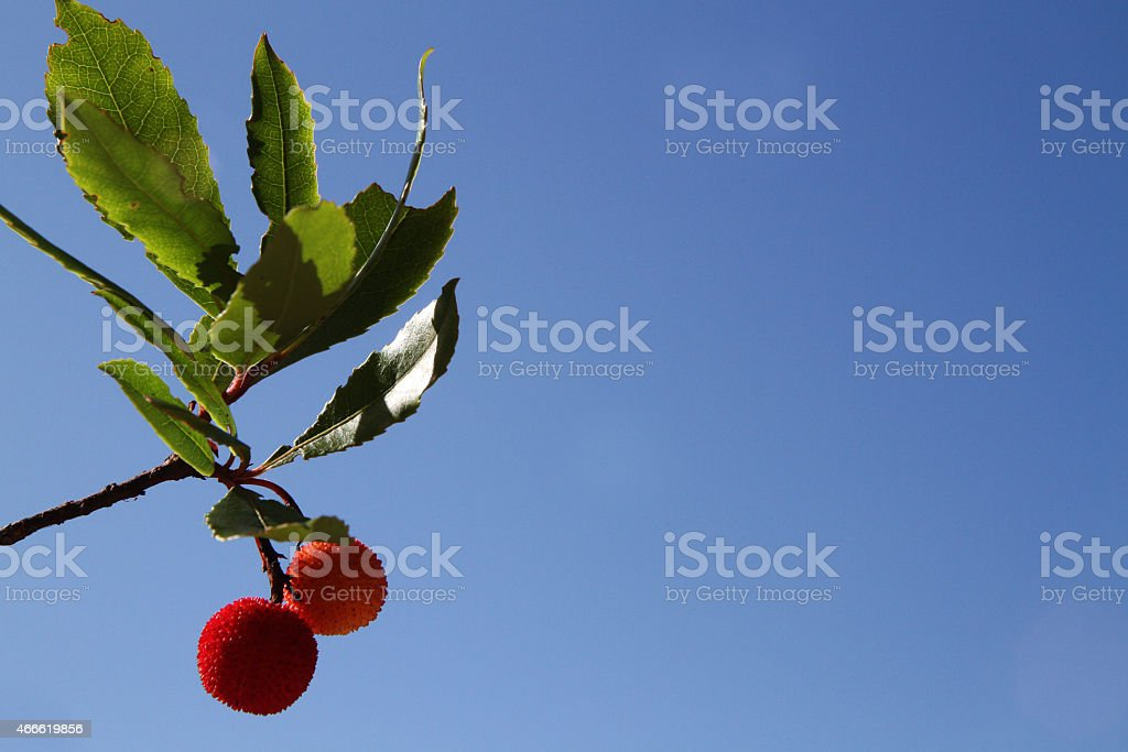 Strawberry tree stock photo
