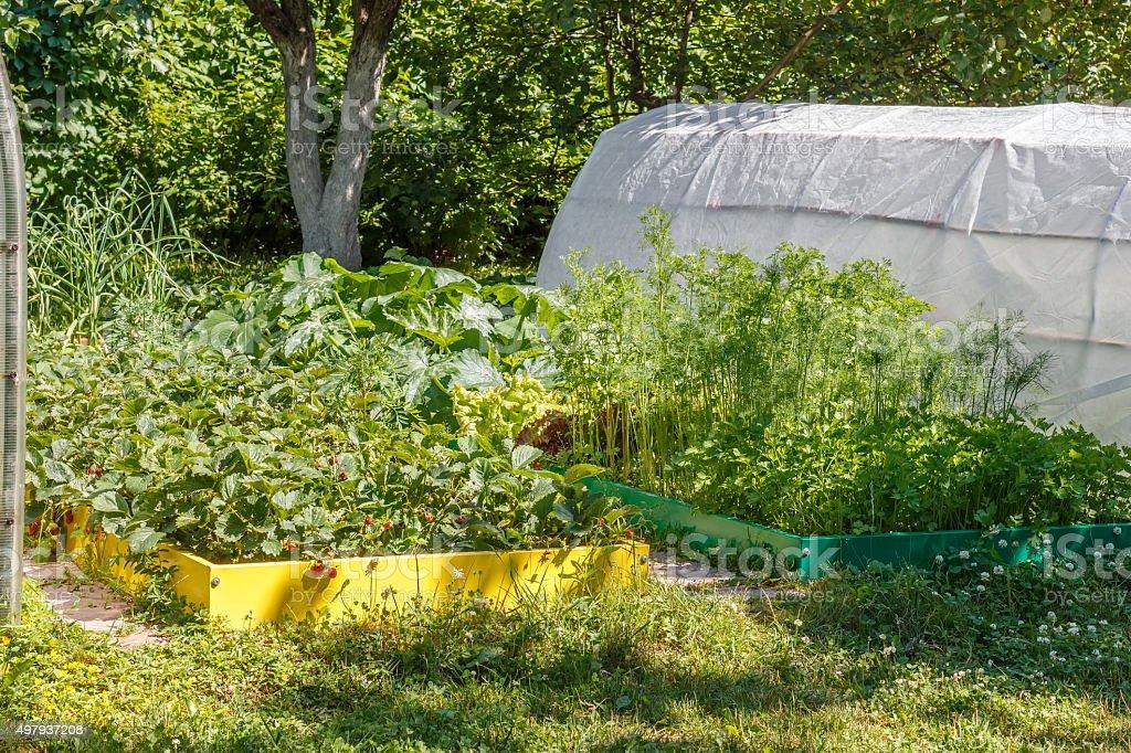 Strawberry, zucchini,  parsley, dill, cilantro, lettuce stock photo