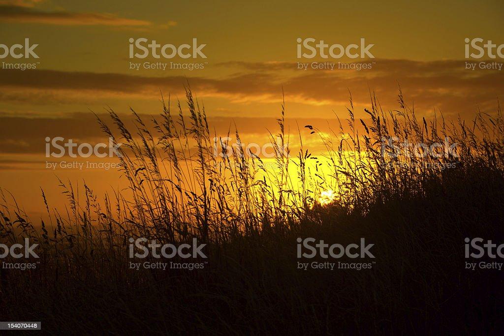 straws and sunset stock photo