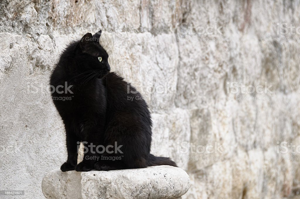 Stray black cat against a stone wall stock photo
