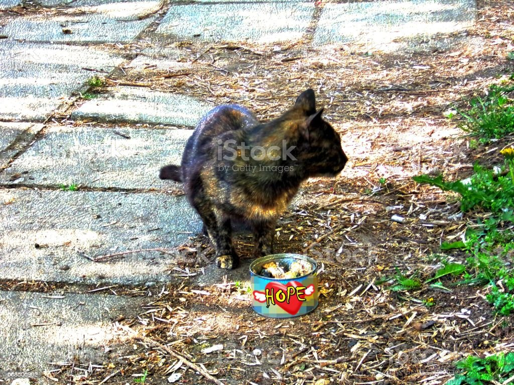 Stray cat eating tuna fish stock photo