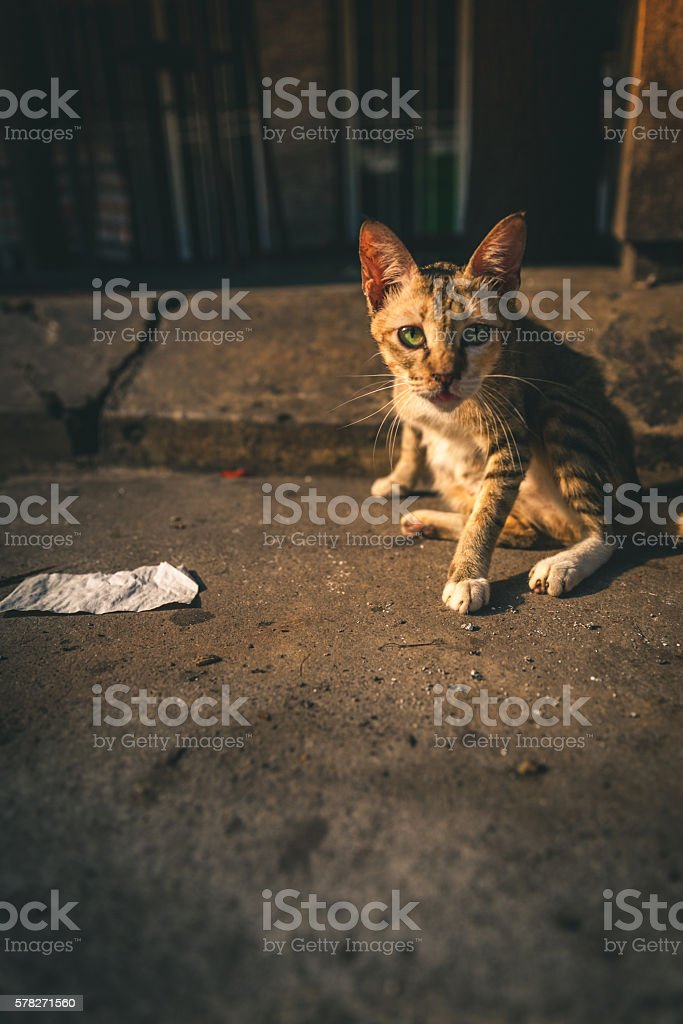 Stray Cat in Kuala Lumpur, Malaysia royalty-free stock photo
