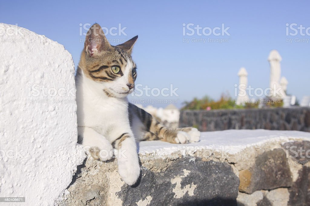 Stray cat in Santorini, Greece royalty-free stock photo