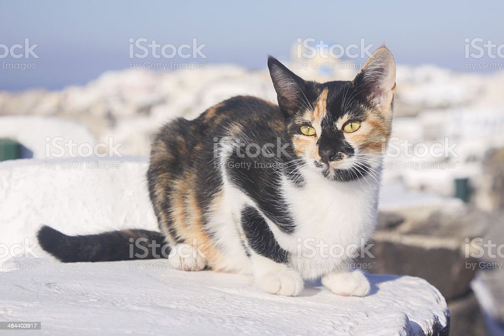 Stray Cat in Santorini, Greece royalty-free stock photo