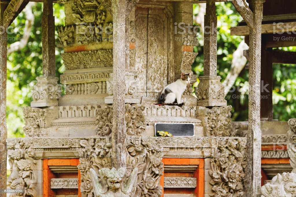 Stray cat in Taman Ayun temple, a royal temple of Mengwi Empire. Bali. Indonesia. stock photo