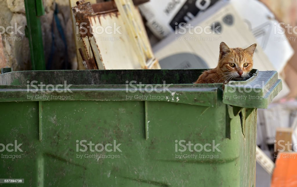 Stray cat in the garbage bin stock photo