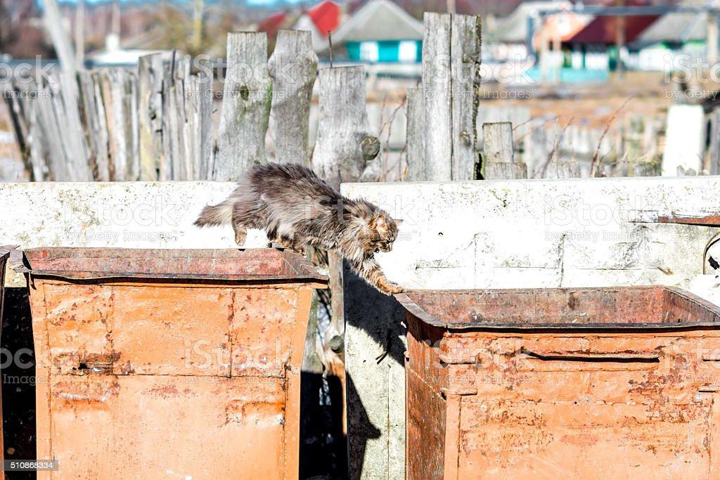 Stray cat in the trash stock photo