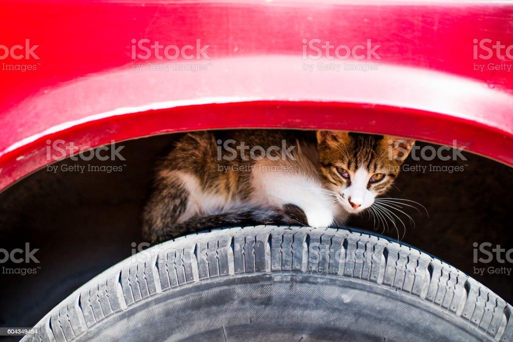 Stray Cat - Istanbul, Turkiye stock photo
