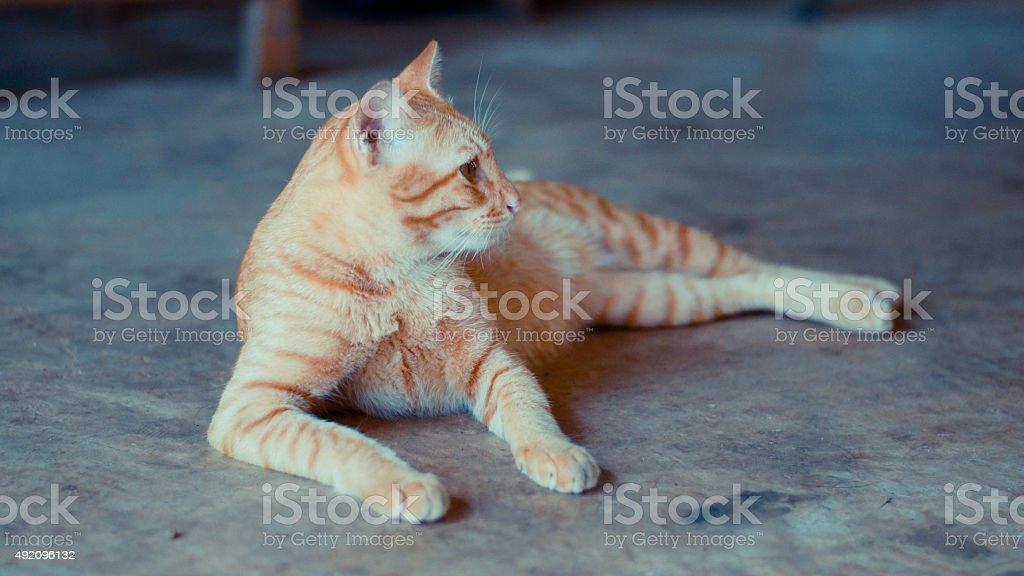 Parásito de cat yacer esperar con esperanza 2 foto de stock libre de derechos