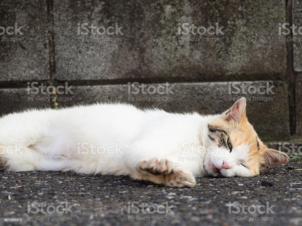 Stray cat lying stock photo