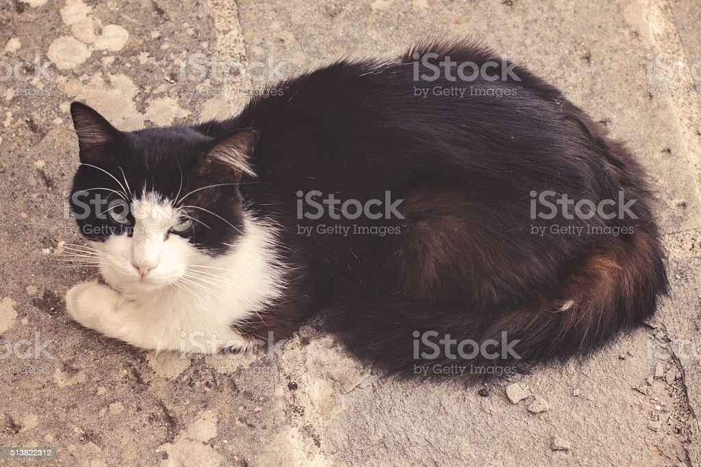 Stray Cat Resting Outside part IV stock photo