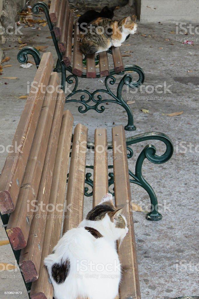 Stray Cat Sitting in Park stock photo