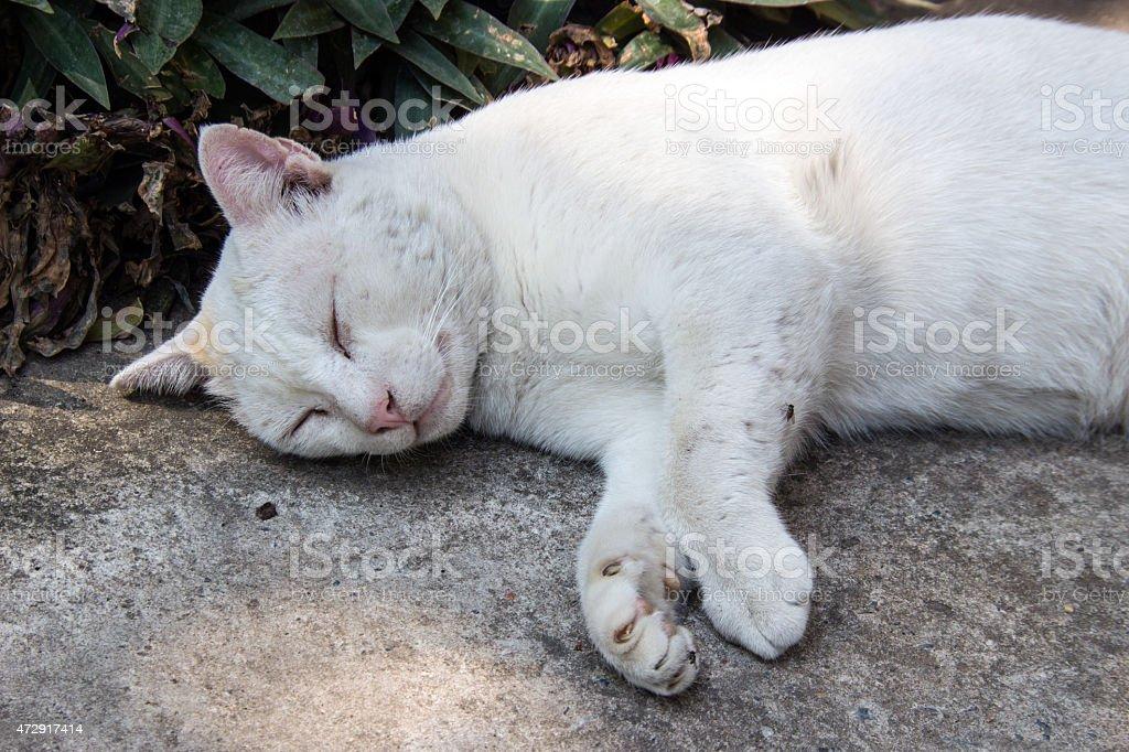 stray cat sleeping on the floor stock photo