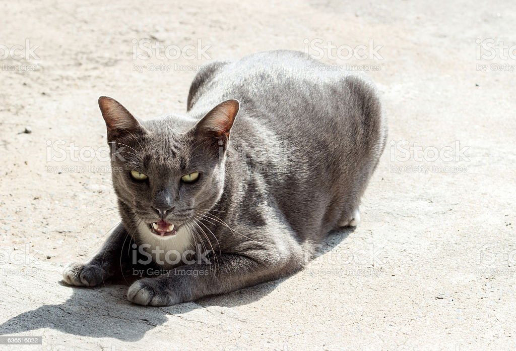 stray cat watching camera stock photo