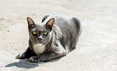 stray cat watching camera