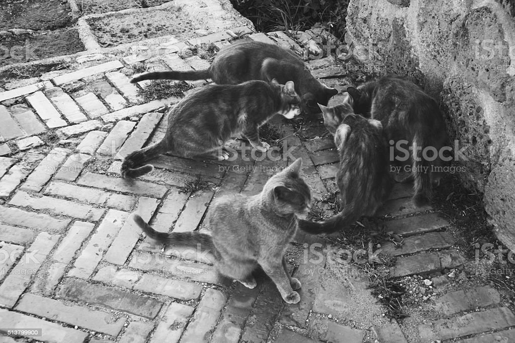 Stray cats are eating in the street stock photo