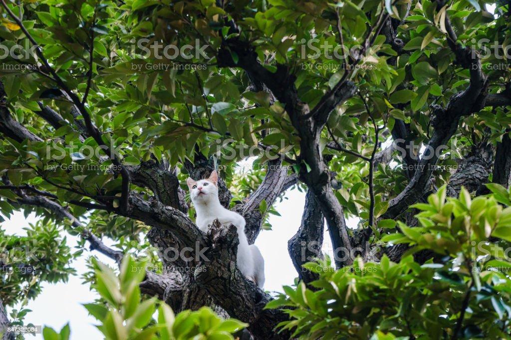 Stray cats climbing a spiked tree stock photo