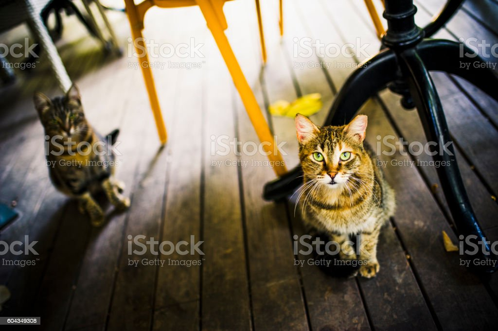 Stray Cats of A Cafe - Istanbul, Turkiye stock photo