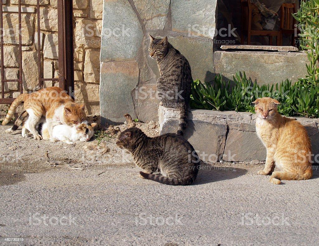 Stray Cats (peep show) stock photo