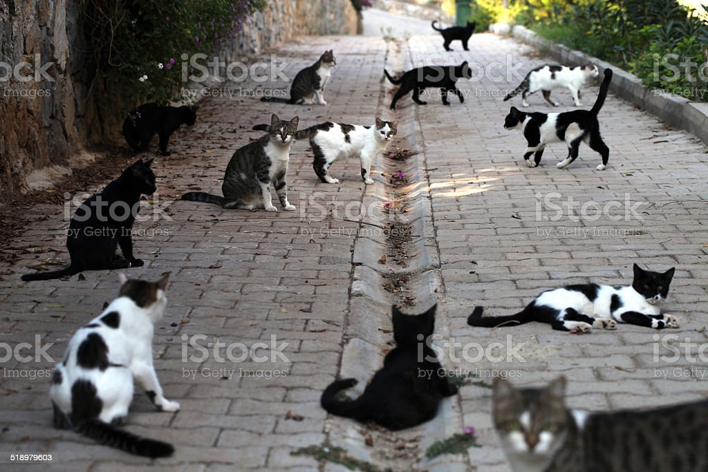 Stray Cats stock photo