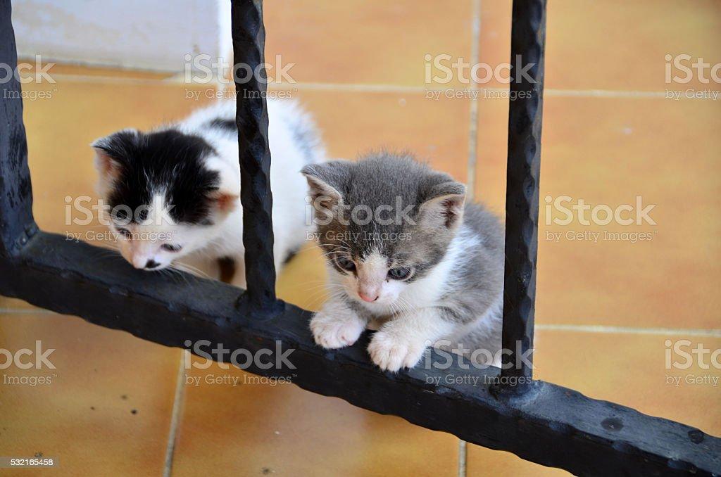 Stray Cats stock photo