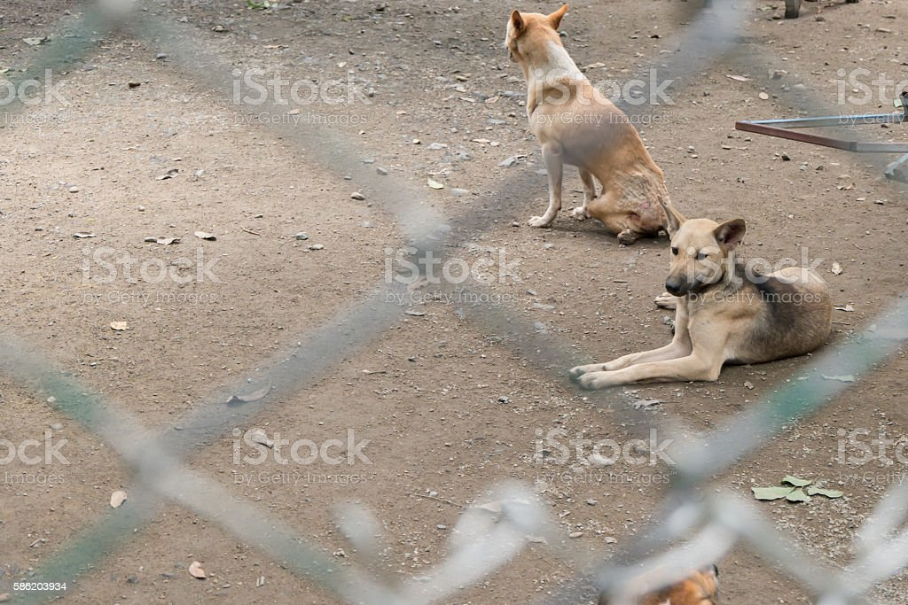 Stray dog behind cage  in Foundation. Copy space stock photo