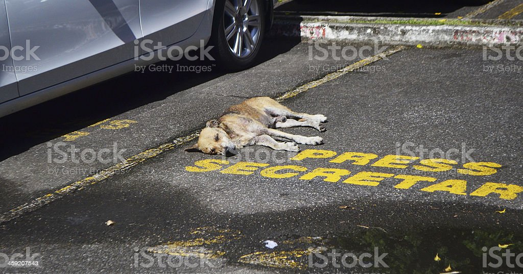 stray dog lying in designated parking spot royalty-free stock photo