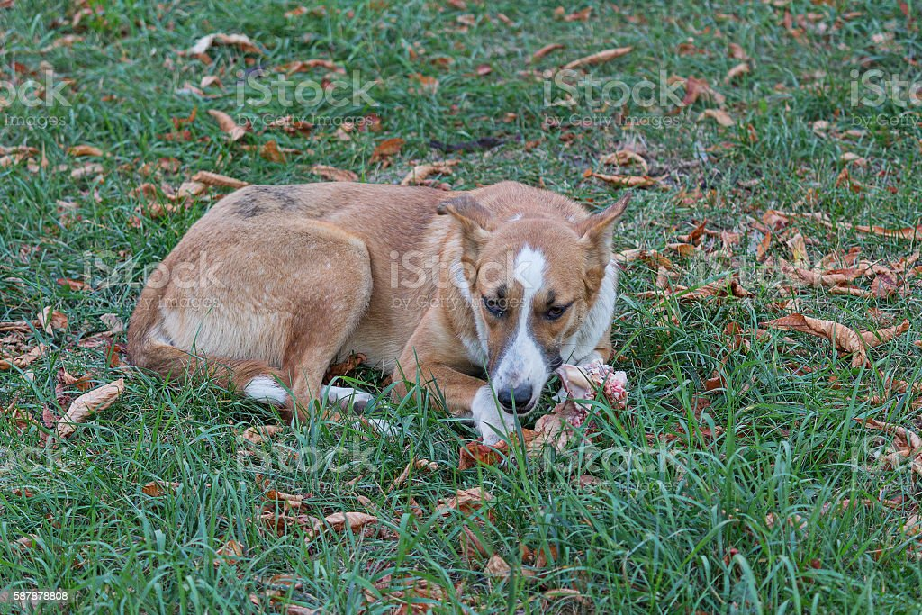 Stray dog lying on the grass there are leftovers stock photo