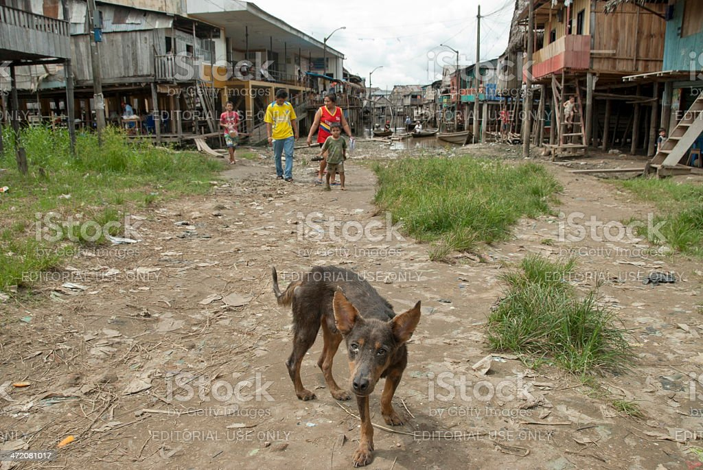 Stray dog on a street in Belen, Iquitos, Peru. royalty-free stock photo